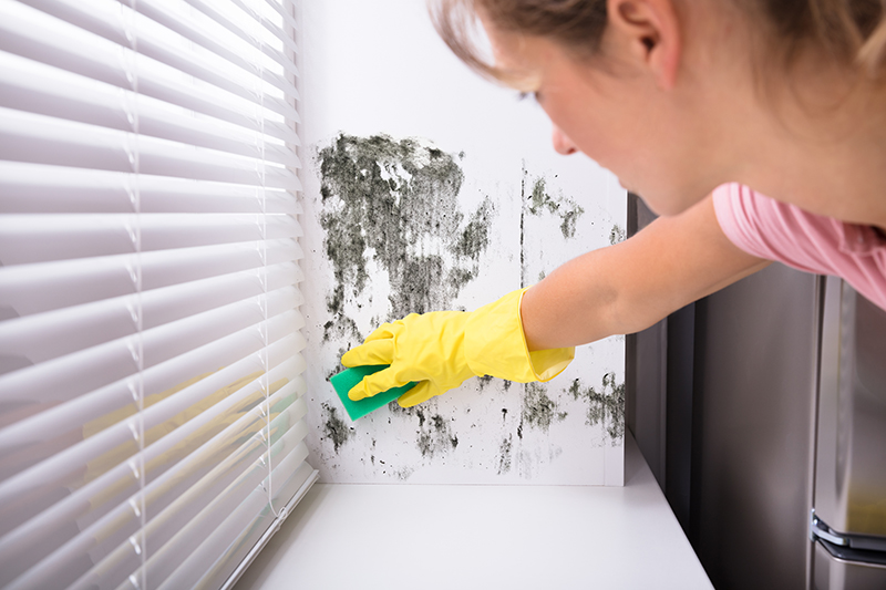 Some Facts About Cleaning Mold