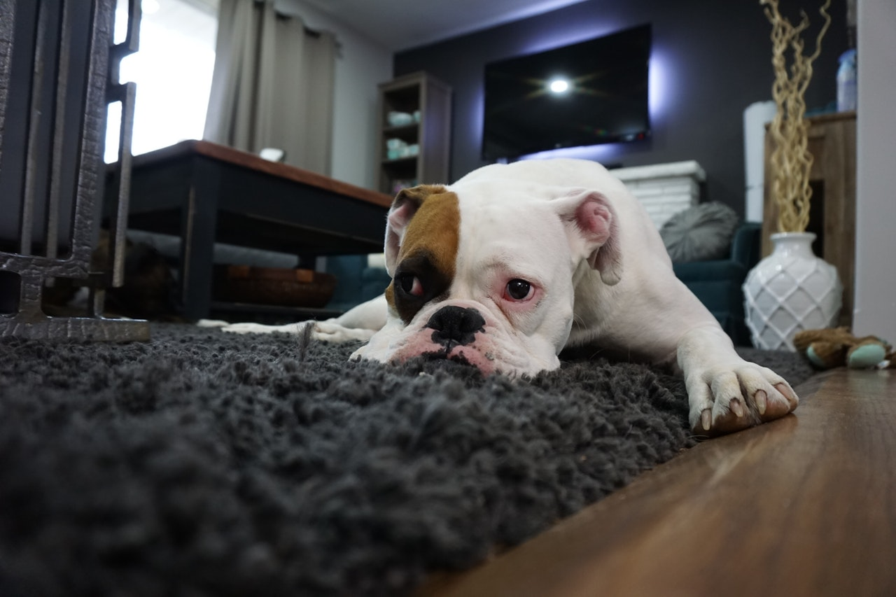 Should You Hire A Professional For Cleaning Your Carpets?