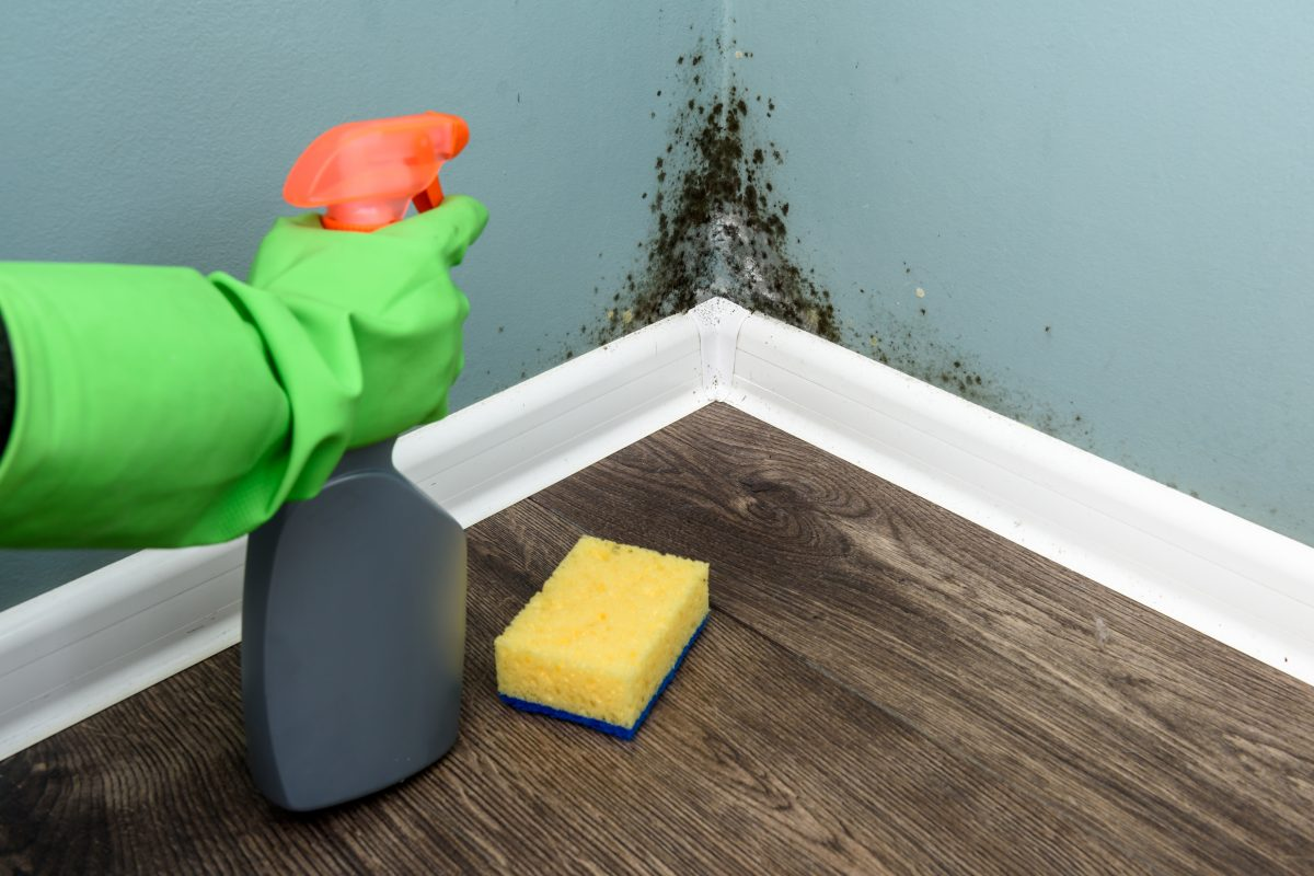 Symptoms of Black Mold, Learn What To Look For
