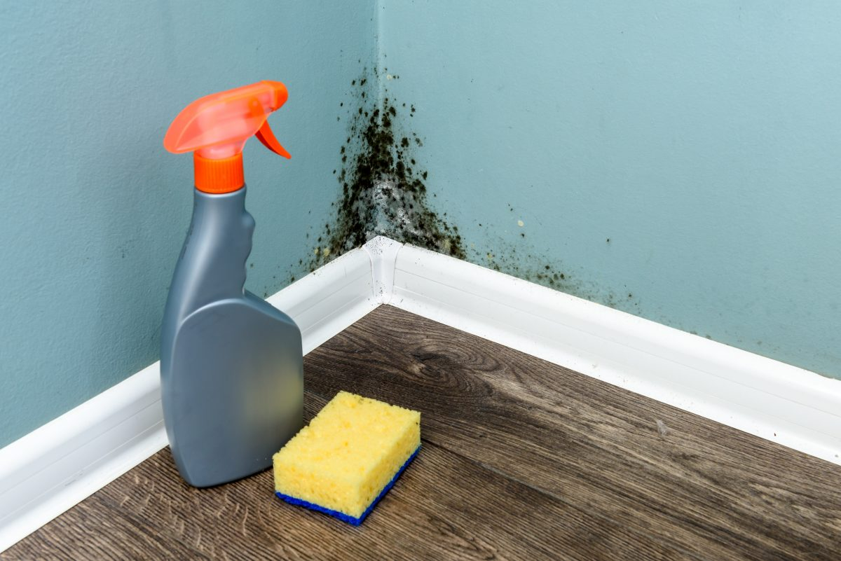 The Effects of Damaging Black Mold